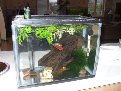 d 233 cor aquarium pour betta