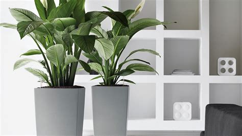 indoor plants no light executive office artificial plants yucca plant in a
