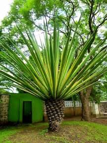 all tree all types of palm trees palm tree outside of the