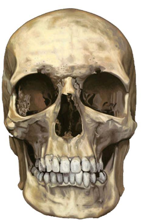 tutorial skull photoshop tutorials photoshop cs6 skull feature