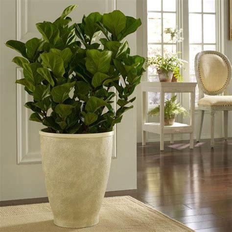large indoor planter bellacor item 615530 image