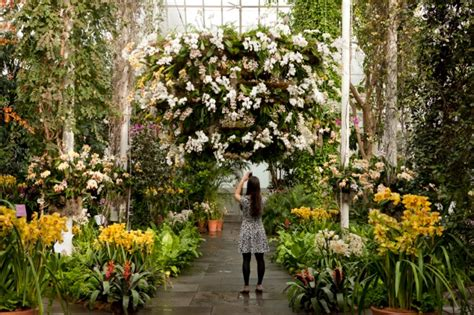 botanical gardens orchid show manhattan living 183 2015 nyc flower shows where to see