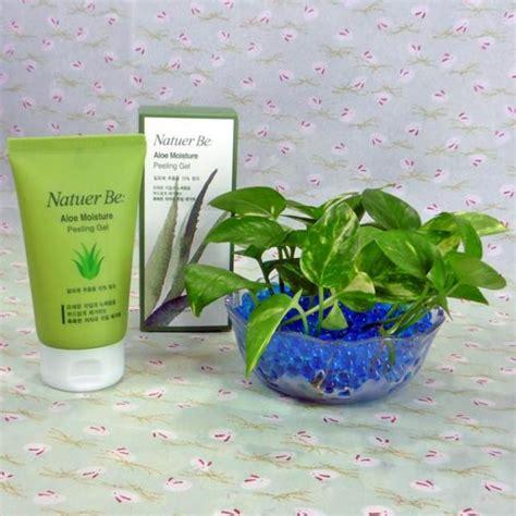gel for plants soiless live money plant with aloe moisture peeling gel
