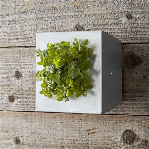 vertical wall planter mini galvanized vertical wall planter williams sonoma