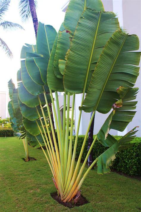 backyard planter ideas best 25 palm trees landscaping ideas on