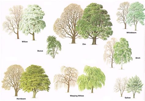 type of trees different types of trees pictures to pin on