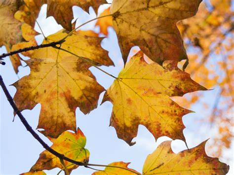 for fall fall festivities for september 2016 marina limited