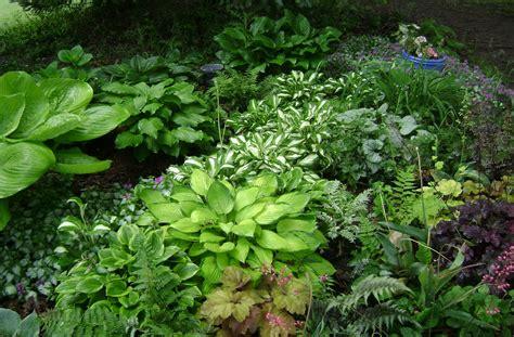 rock garden plants for shade shade gardens ridgeview