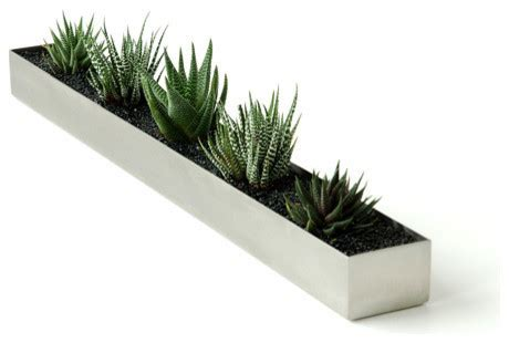 modern plants indoor fruit trough modern indoor pots and planters by