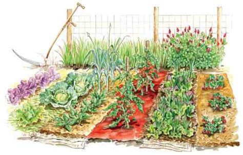 the vegetable garden get the most from vegetable garden mulches organic
