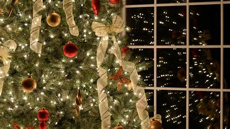 when to put up a tree when do you put up your tree lifehacker australia