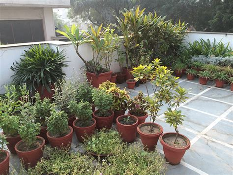 terrace gardening dhara the earth an indian gardening my roof top