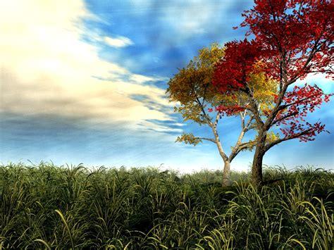 3d tree wallpaper 3d tree wallpaper free 3d wallpaper