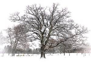winter trees winter tree edward photography journal 2013