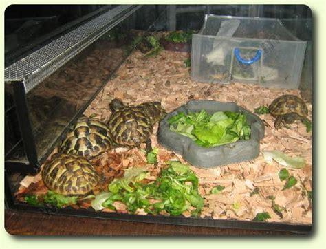le terrarium les tortues terrestres vivelestortues