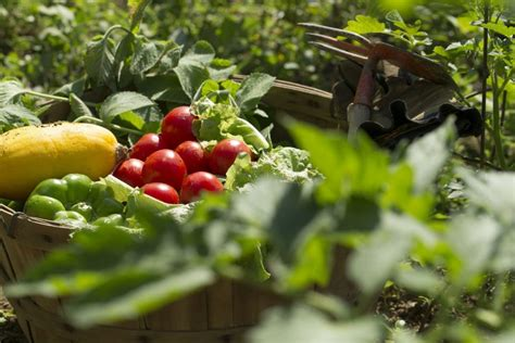 garden fruits and vegetables 6 benefits of growing your own food