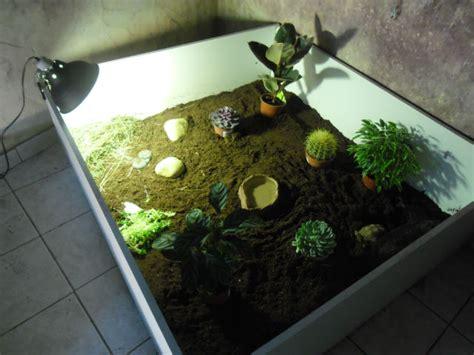 voila mon nouveau terrarium pour ma sulcata sulcata 84