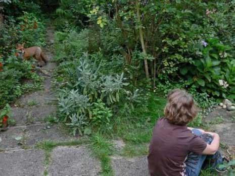 Garten Der Abendnebel by Ungew 246 Hnlicher Besuch In Unserem Naturgarten Purenature