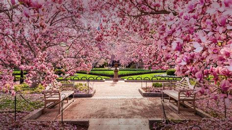 cherry blossoms at the national mall washington dc usa 169 pavone alamy 1 photo 1 day