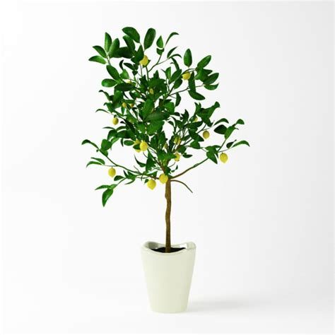 potted tree potted lemon tree 3d model cgtrader