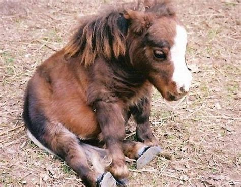 how many pony in a pound fuzzy baby animals cuddle look at baby
