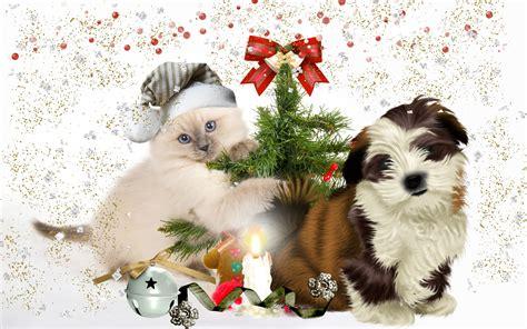 puppy tree puppy kitten tree wallpaper 2560x1600 210304