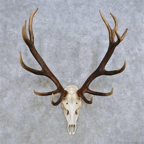 deer antler deer skull antler european mount for sale 14425 the