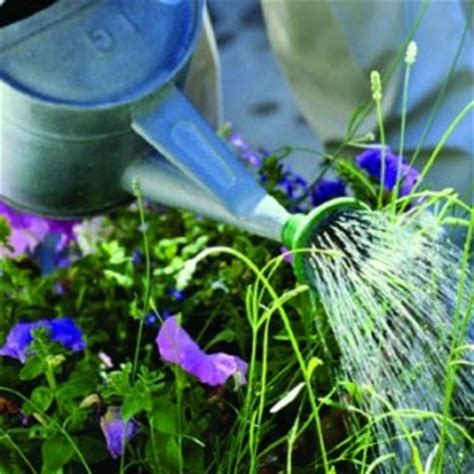 water for plants kitchen garden tips in how to water your plants aqsaa usman