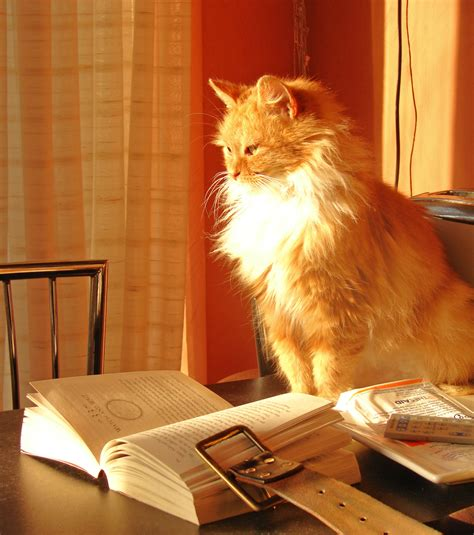 cat picture book file cat with book 2320356657 jpg wikimedia commons