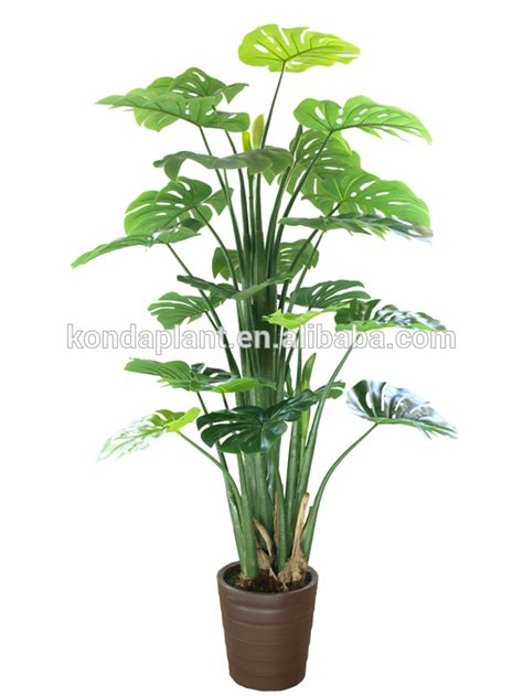 cheap tree sale trees for sale cheap 28 images cheap artificial ficus
