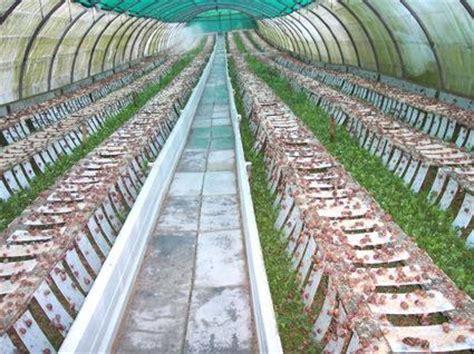 cria de caracoles en casa sistema de procesos en la cr 205 a de caracoles como hacer un