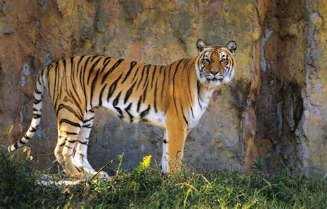 top 10 in japan top 10 zoos in japan all about japan