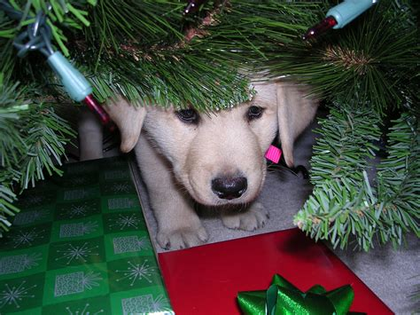 puppy tree how to keep puppy away from tree 28 images disney