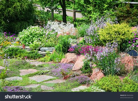 rock garden plants for sale conifers and flowering perennial plants in an alpine rock