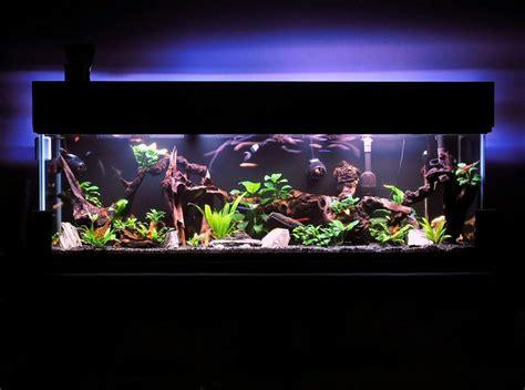 aquarium decoration ideas diy aquarium decoration ideas 2017 fish tank maintenance