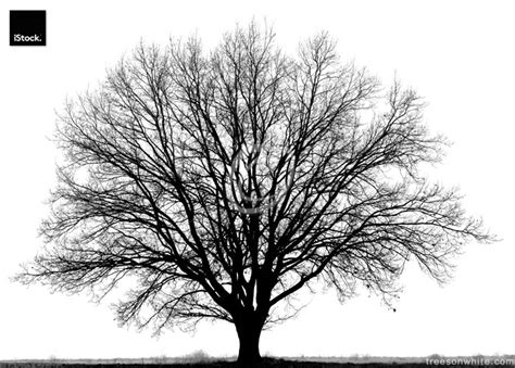 tree in white black trees isolated on white trees on white trees on white