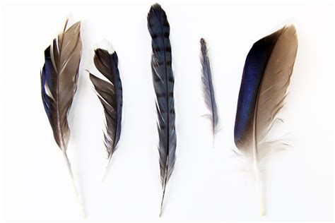 feather with feathers tr 233 sors de luxe