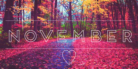 for november november s news whatsinstorekitimat