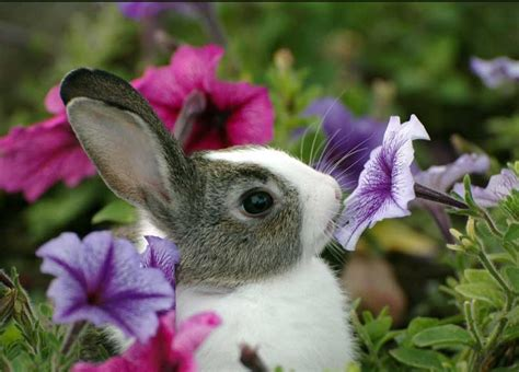 flower and bunny bunny pictures that will make you say aww 30 pics