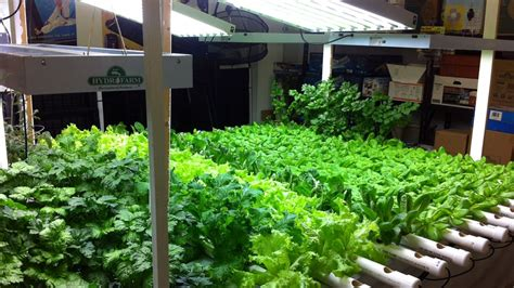 hydroponic indoor gardening challenges while growing