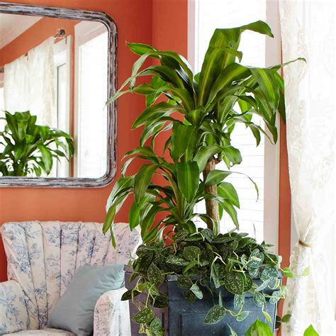 indoor plants no light indoor plants no light www imgkid the image kid