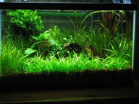 a thomasi the basics of co2 injection for the planted aquarium