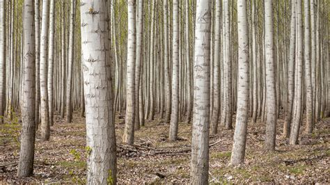 desk top tree dense forest trees 4k ultra hd desktop wallpaper