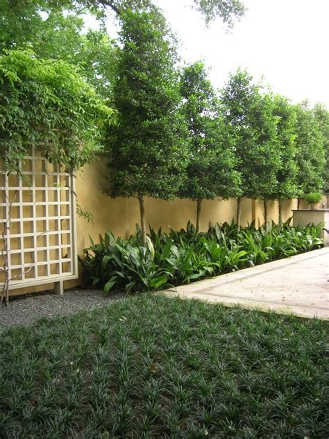 backyard planter ideas best 25 privacy plants ideas on privacy