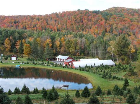 flagstaff tree farm evergreen nursery and tree farm
