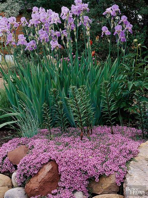 best plants for rock gardens best plants for rock gardens jardins arri 232 re cours et fleur