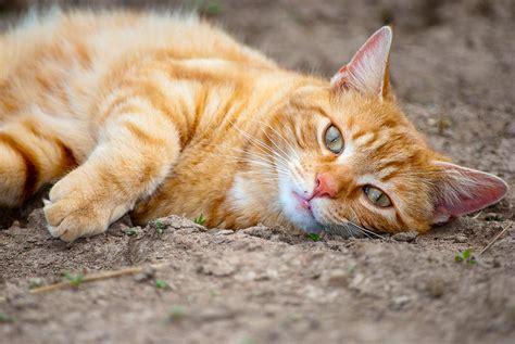 orange cat orange cat chillaxing by gogogodzirra on deviantart