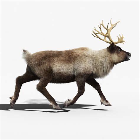 animated reindeers reindeer fur animated 3d model animated rigged max obj