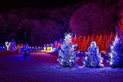 tree lights pictures outdoor trees