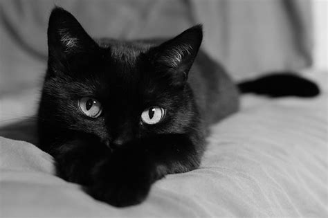 cat black october black cat month via about check out our